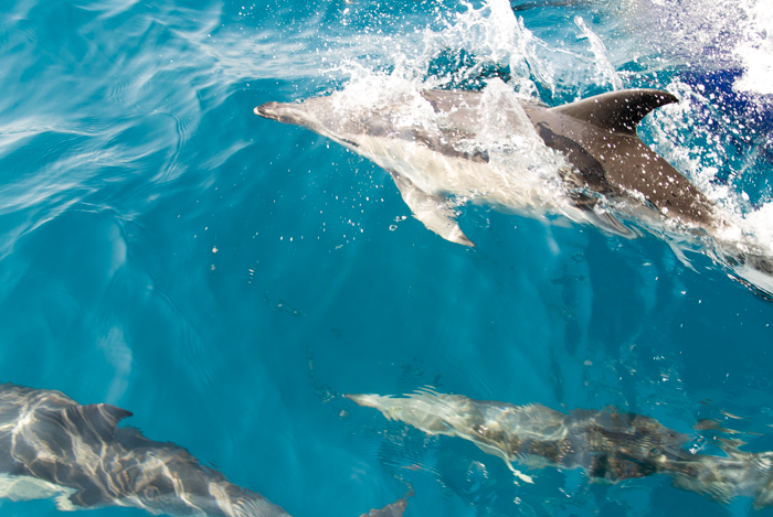 wedding boat trip with dolphins